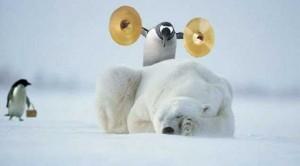 http://www.jur-linux.org/linux/pics/Penguin%20polar%20bear%20symbols.jpg