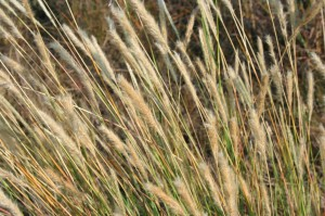 Tommy Stone Grasses photo
